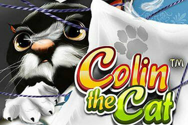Colin the cat